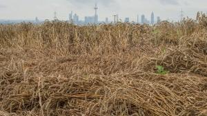 Hessens Bauern sorgen sich um Ernte