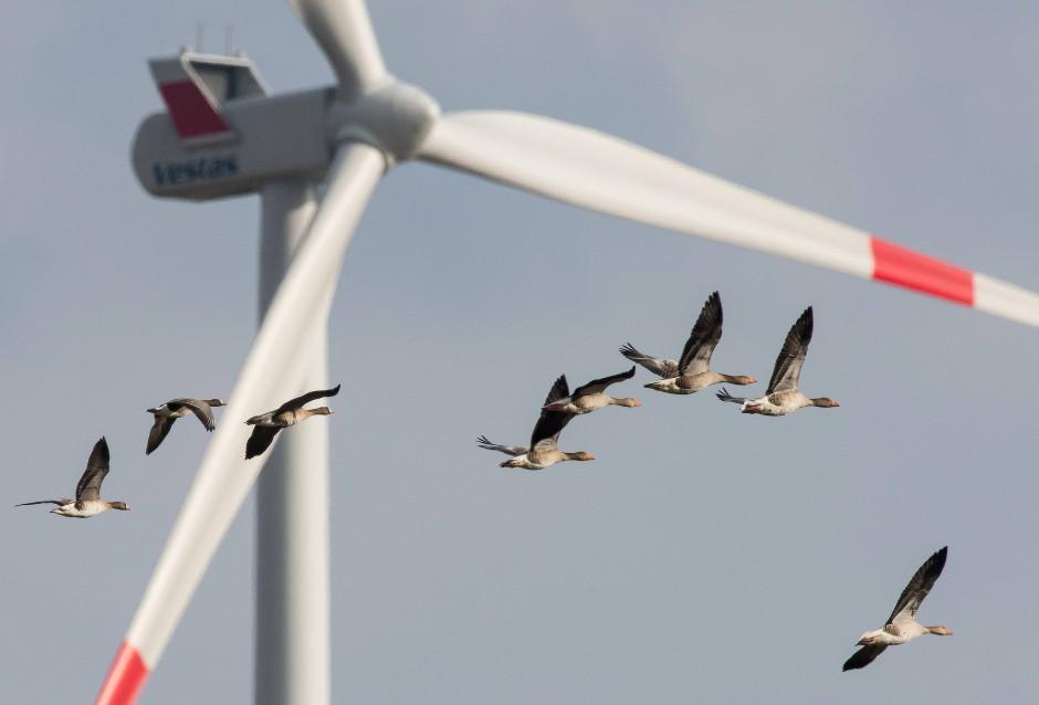 Schnittstelle: Immer wieder kollidieren Windradrotoren mit Vögeln – der VGH hat nun den Vogelschutz gegen die Energieversorgung gestärkt