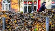 Leseblattsammlung: Laubberge im Frankfurter Nordend