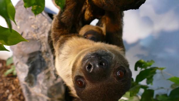 Zookinder in Corona-Ruhe