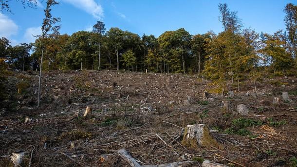 Eichen für die nächste Waldgeneration