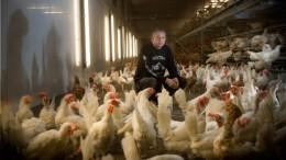 """""""Dumpingpreise bei Eiern nicht gesund"""""""