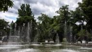 Vom Winde verweht: Nicht nur die sommerliche Dürre ist Ursache dafür, dass im Palmengarten viel Wasser verbraucht wird, auch Windböen sorgen dafür, dass Springbrunnen nachgefüllt werden müssen.