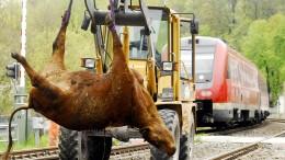 Kuh gerät vor fahrenden Zug und stirbt auf den Gleisen