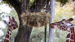 Tiere im Zoo, Wahl im Landtag, Moderne in Frankfurt