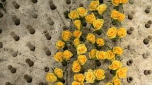 Vom Engpass bei Blumen kann keine Rede sein