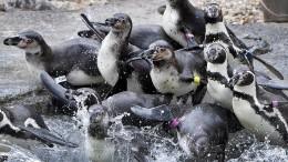 Steigende Temperaturen lassen Tiere kalt