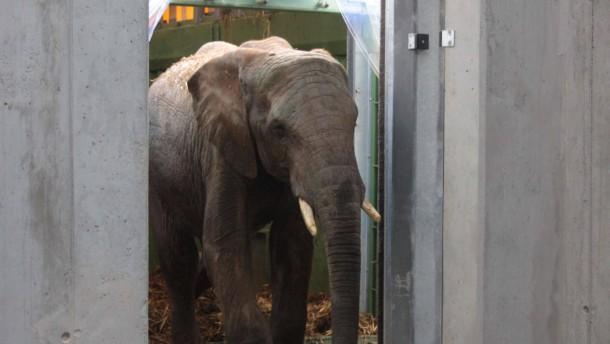 Mehr Besucher durch neues Elefantenhaus