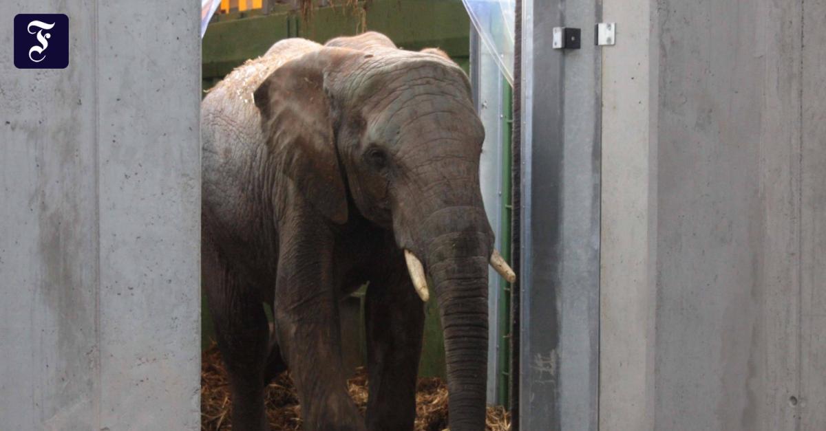 Zoo Rhein Main