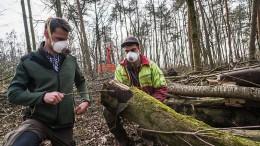 30.000 Bäume mit giftigen schwarzen Pilzsporen befallen