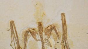 Senckenberg: Ältestes Fledermausfossil entdeckt