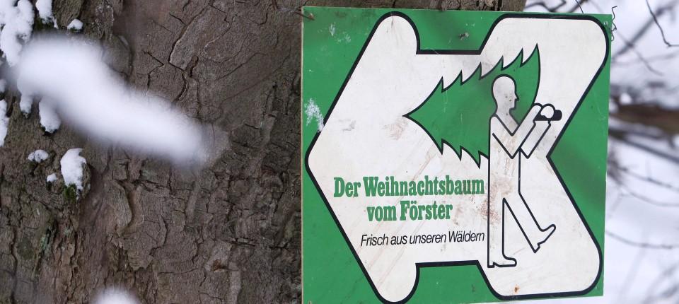 Weihnachtsbaum Selber Schlagen Berlin Brandenburg.Weihnachtsbäume Selber Schlagen In Rhein Main