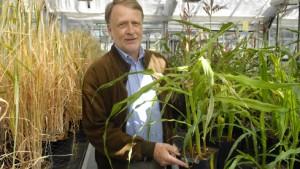 Pflanzenforscher rügt Ministerin für Genmaisverbot