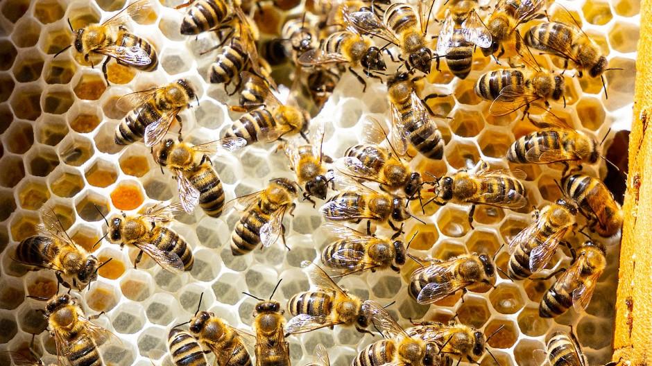 Ein Projekt, das durch den Naturschutz-Euro gefördert wird: Die Bienenbotschaft hilft Insekten.