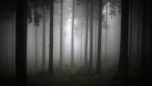 Land fordert Anteil an privater Holzernte