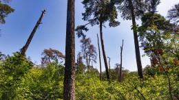 Rettungsaktion für den Frankfurter Stadtwald