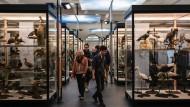 Vogelperspektive: Auch das Frankfurter Senckenbergmuseum öffnet wieder seine Türen.