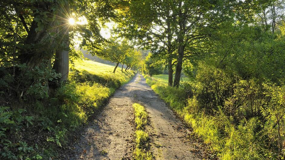 Lichtblick: Obwohl der Spessart populärer wird, gibt es dort noch ruhige Wanderwege wie hier bei Sinntal.