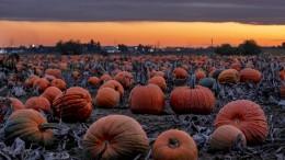Orange leuchtet der Herbst