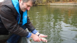 Neue Fische für Hessens Flüsse