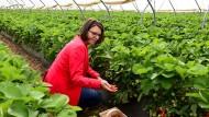 Zugriff: Immer wieder im Mai pflückt Agrarministerin Hinz und eröffnet offiziell die Saison, die faktisch schon seit einiger Zeit läuft