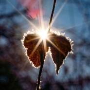Seltener Anblick: Ein gefrorenes Blatt auf einem Feldweg in Frankfurt.
