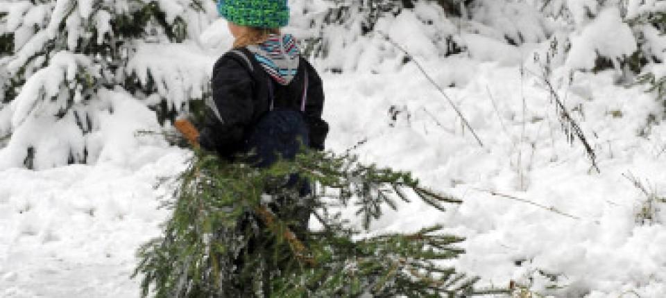 Gaststätte Tannenbaum.Tannenbaum Selber Schlagen Frisch Gesägt Aus Dem Stadtwald Region