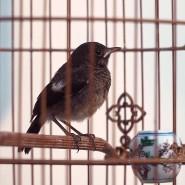 """Filmstill aus Rob Crosses Video """"Dear Samuel"""": Der zärtliche Blick auf Vögel im Käfig wird zur Metapher für ein sorgsames menschliches Miteinander."""