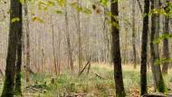 Ein Drittel der Jungbäume droht zu vertrocknen