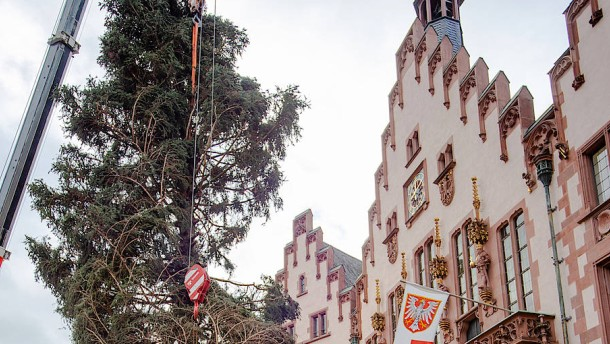 Lob der Asymmetrie des Weihnachtsbaums