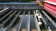 Noch schmutzig: In der Frankfurter Kläranlage in Niederrad wird das Abwasser von Frankfurt und Offenbach sowie von rund einem Dutzend Umlandkommunen so gereinigt.