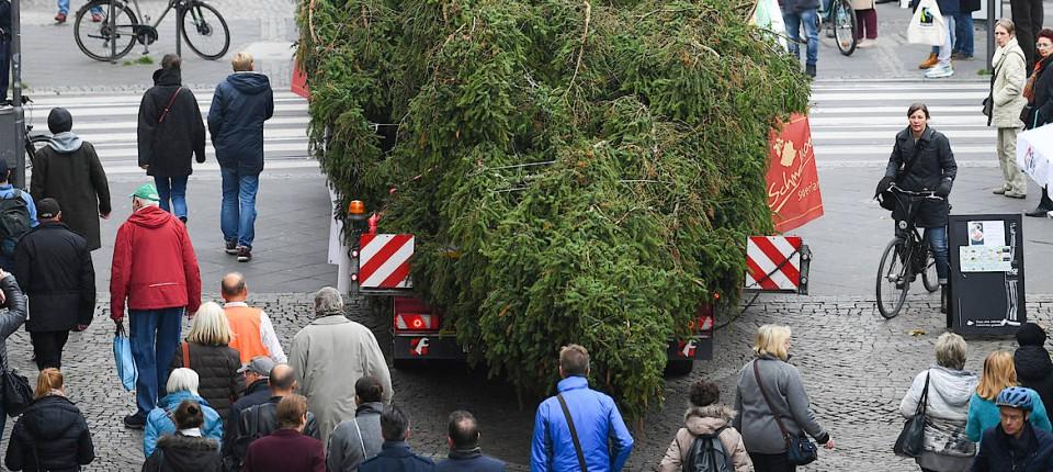Weihnachtsbaum Frankfurt.Frankfurter Weihnachtsbaum Kommt Weitestgehend Heil Auf Römer An