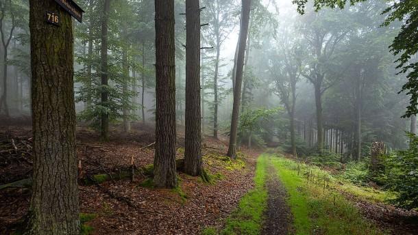 Naturschützer fordern mehr Wildnisgebiete