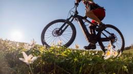 Ferien, Familien, Fahrrad