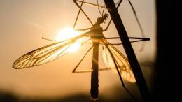 Mehr Arbeit für die Stechmückenjäger am Rhein