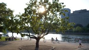 Mainufer in Frankfurt wird umgestaltet