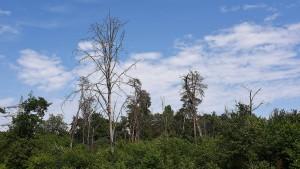 """Naturschutz als neue Aufgabe im """"Hotspot der Biodiversität"""""""