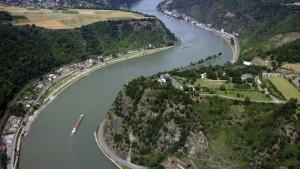 Jungtiere von 34 der einst 44 Fischarten im Rhein