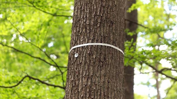 Farbige Bänder an Bäumen auf dem Naturfriedhof
