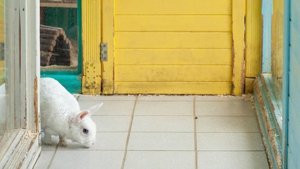 Ein Heim für Hasen mit Heuallergie