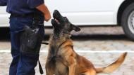 Einsatz: Auch ein Spürhund rückte nebst Herrchen nun in Kassel an (Symbolbild)