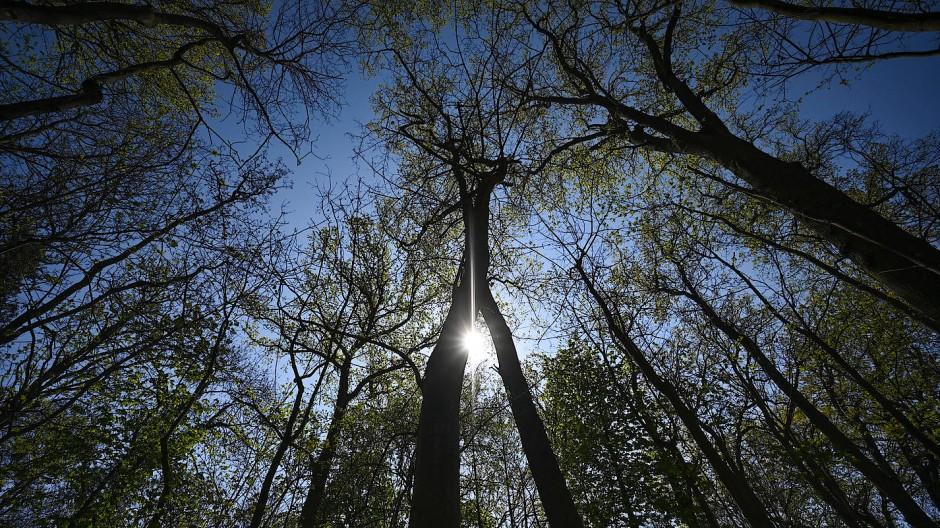 Beliebtes Ausflugsziel: das Naturschutzgebiet Auwald Kühkopf bei Stockstadt