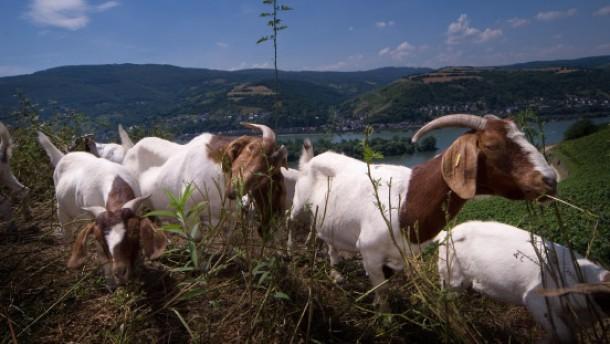 Landschaftspfleger auf vier Beinen