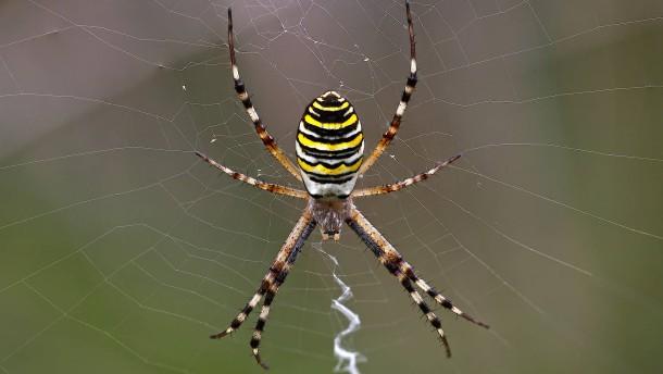 Vielversprechendes Spinnengift