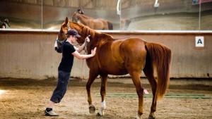 An Pferden den Umgang mit Mitarbeitern üben