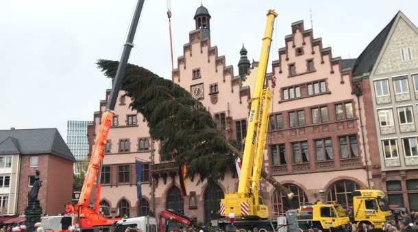 Weihnachtsbaum Frankfurt.Trubel Auf Dem Römer Frankfurt Hat Einen Neuen Weihnachtsbaum