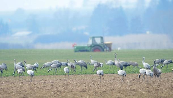 Zugvögel in Hessen