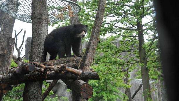 Zoo Umbau - Zoodirektor Manfred Niekisch und Kulturdezernent Felix Semmelroth eröffnen die neue Bärenanlage Ukumari-Land