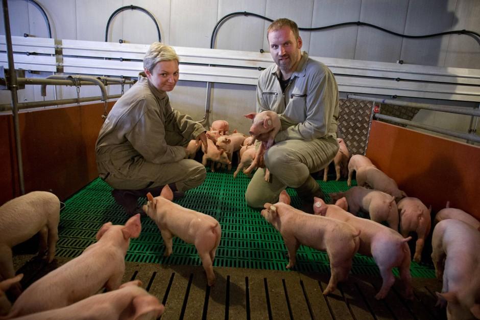 Bild zu: Ein Schweinestall muss kein Saustall sein - Bild