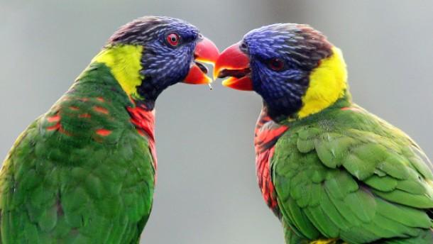 Wertvoller Papagei gestohlen